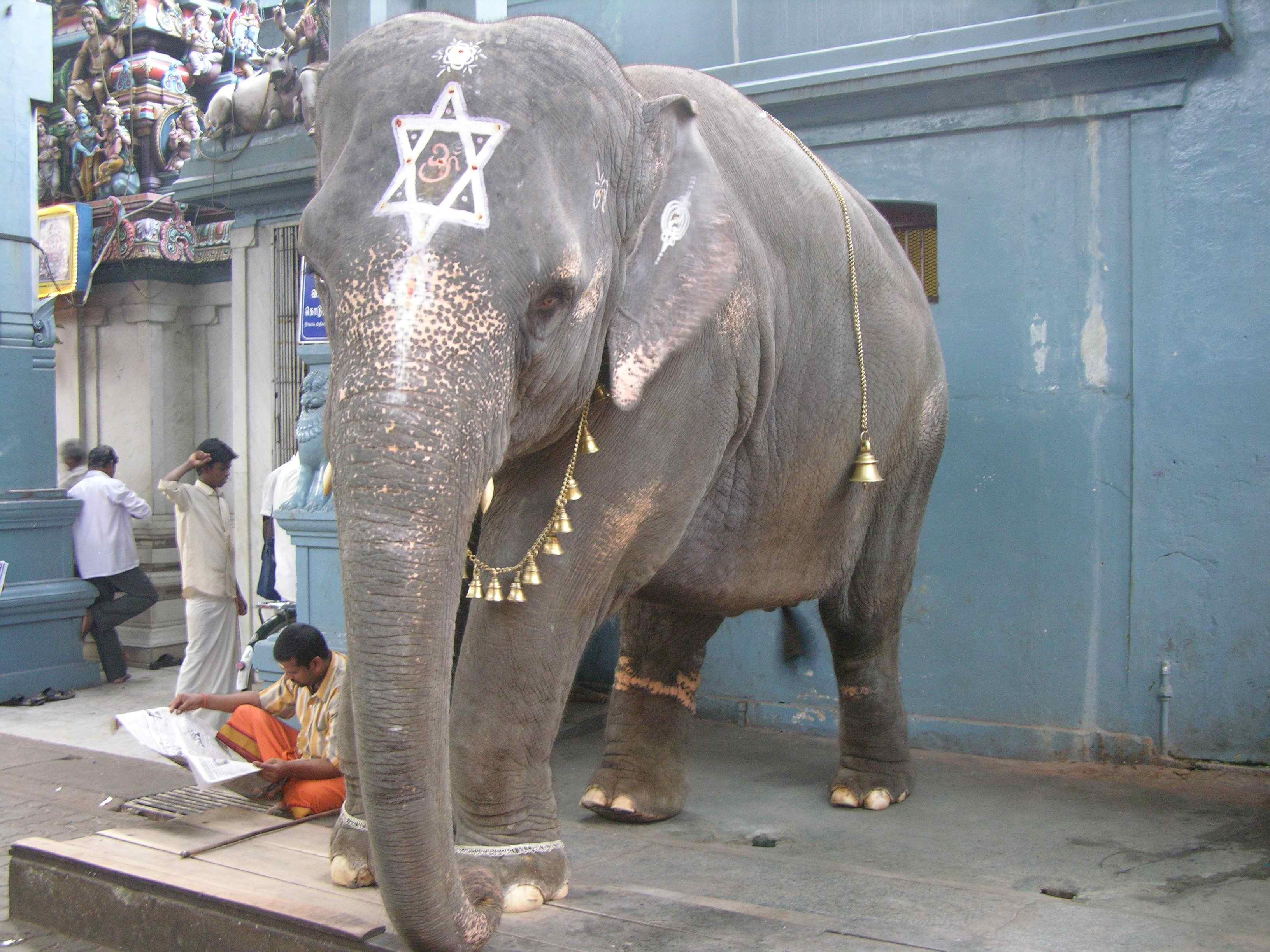 Jewish-elephant.jpg